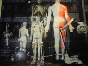 Dolore muscolare e medicina biologica